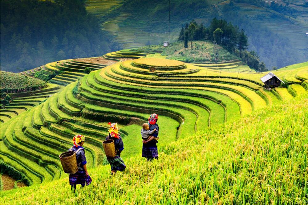 Où découvrir les plus belles rizières en terrasses du Nord du Vietnam ?